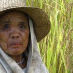 coop member ifugao