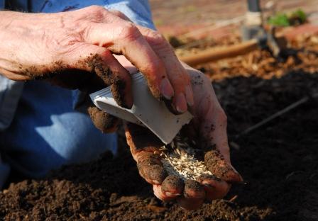 planting_organic_seeds