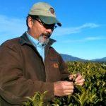 richard sakuma tea plantation
