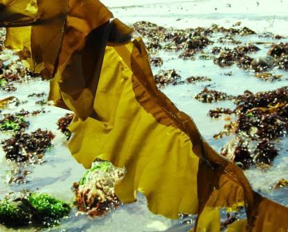 seaweed story