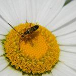 sidebar_pollinators