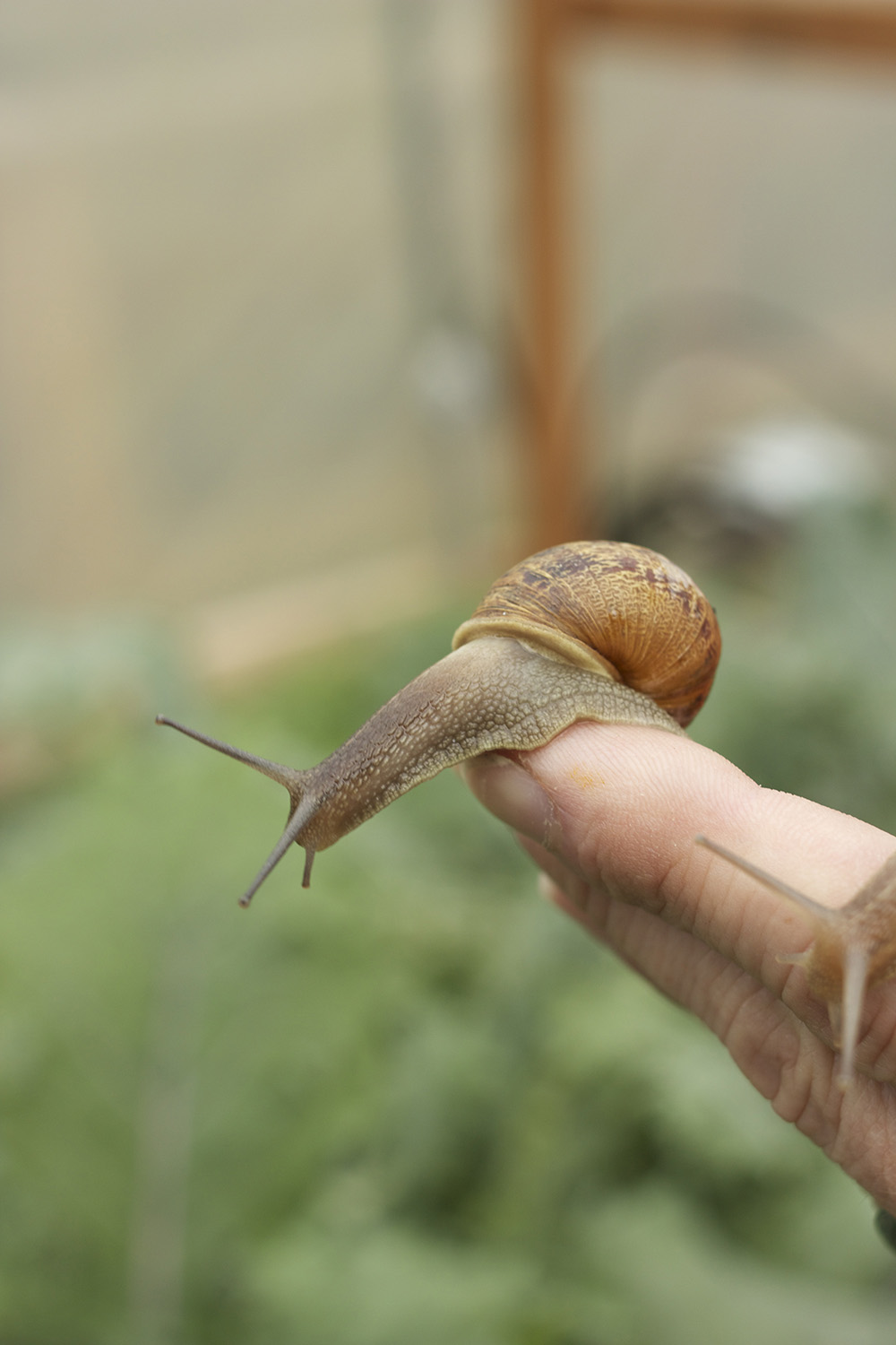 snail on hand