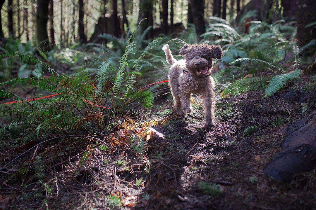truffle-hunting-paola-thomas-photography-3-of-8