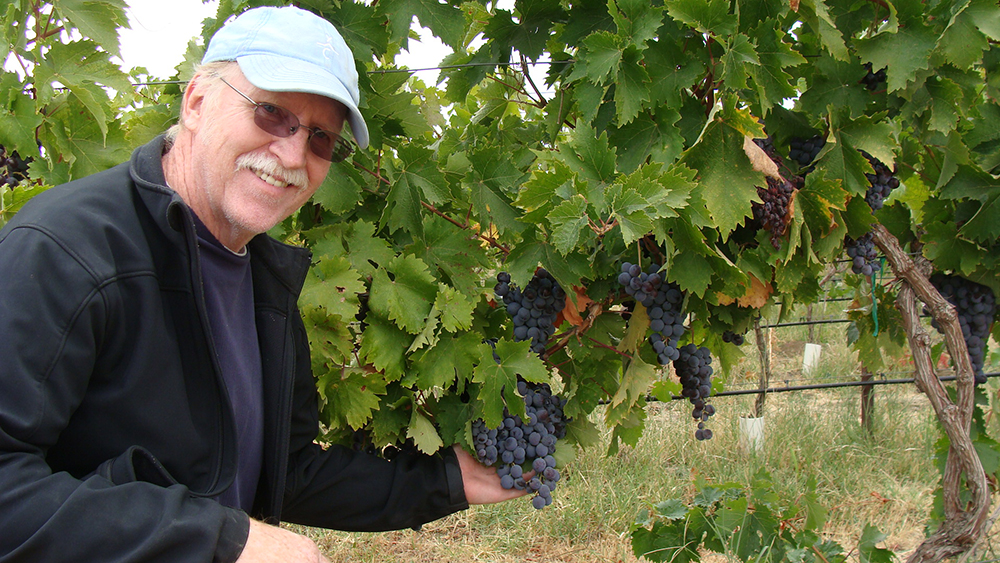 Tom Campbell holding Black Muscat grapes-DSC03433