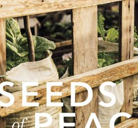 Edible Seattle. Bhutanese refugees garden